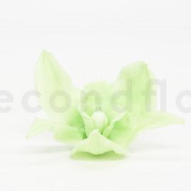Orchidée Cymbidium Stabilisée L boîte de 4 - Vert