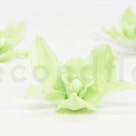 Orchidée Cymbidium Stabilisée L - Boîte de 4 - Vert
