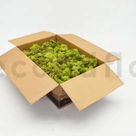 Lichen Scandinave sans tête / Partie Inférieure - Vert Citron