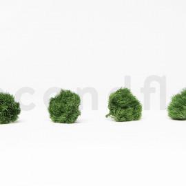 Green Ball Stabilisée M boîte de 4 - Vert