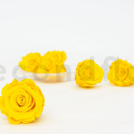 RoseAmor Preserved rose L - box of 6 - Yellow