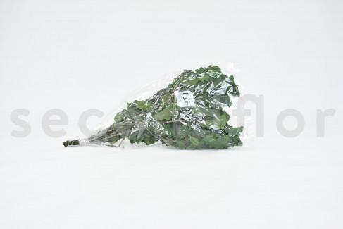 Chêne Stabilisé - Vert