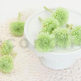 Chrysanthème Ping Pong Stabilisé S - Boîte de 8 - Vert