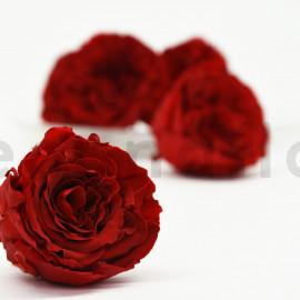 Rose de Jardin stabilisée RoseAmor XL - Boîte de 6 - Rouge