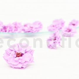 Rose Sauvage Stabilisée M - Boîte de 12 - Violet