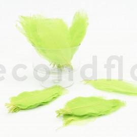 Skeleton Magnolia - Boîte de 100 - Vert Clair