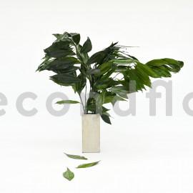 Coculus Stabilisé - Vert