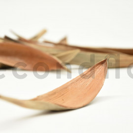 Feuilles de coco Mini - Naturel