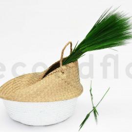 Orge Stabilisée - Vert