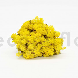 Preserved Scandinavian Lichen / 6.6 lbs - Yellow