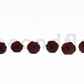 RoseAmor Preserved rose L+ - box of 6 - Chocolate