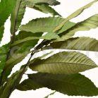 Châtaignier Stabilisé - Bouquet de 150 gr - Vert