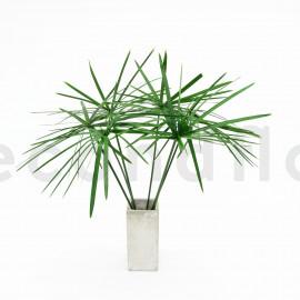 Papyrus large stabilisé - 7 tiges - Vert