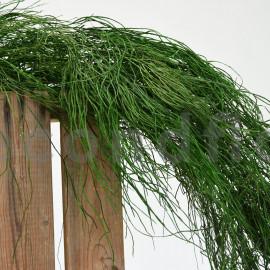 Licopodium long stabilisé - Vert