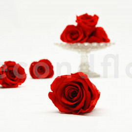 RoseAmor Preserved rose L+ - Box of 6 - Red