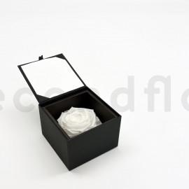 Bloominbox XL - Écrin noir - Rose stabilisée blanche