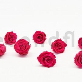 Rose stabilisée Kiara L - Boîte de 8 - Hot pink