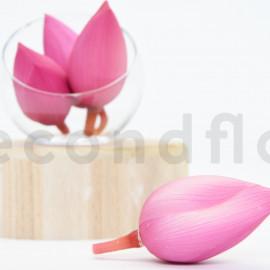 Fleur de Lotus stabilisée L - Boîte de 4 - Rose