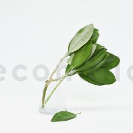 Branche de magnolia stabilisé - Vert