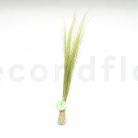 Bright Grass préservé - Vert