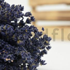 Lavande séchée qualité Super Bleue