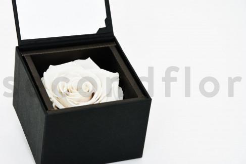 Bloominbox - Écrin noir - Rose stabilisée blanc naturel