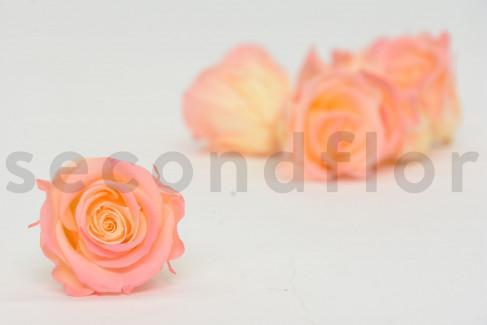 Rose stabilisée Kiara M - Boîte de 9 -  Rose + pêche
