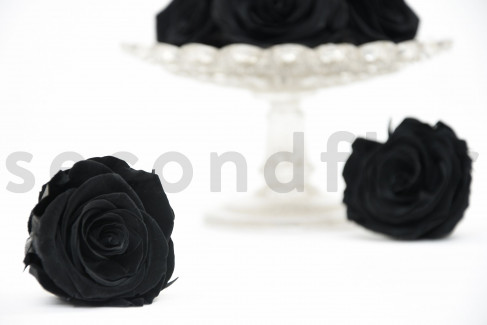 Rose stabilisée Kiara L - Boîte de 8 - Noir