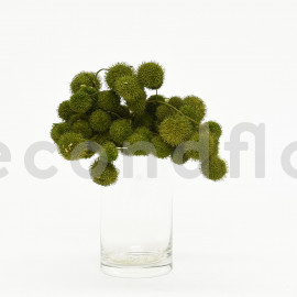 Fruit de platane - Sachet 250 gr - Vert