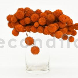 Fruit de platane - Sachet 250 gr - Orange