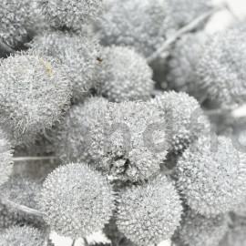 Fruit de platane - Sachet 250 gr - Argent