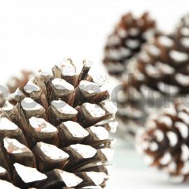 Pomme de pin maritime - Filet 1kg - Pointes blanches