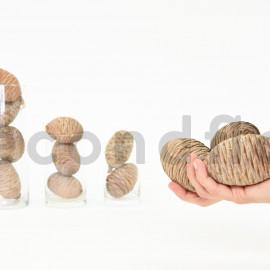 Pomme de cèdre - Filet 12 pcs - Naturel