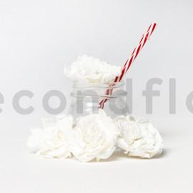 Gardénia Stabilisé XL - Boîte de 3 - Blanc