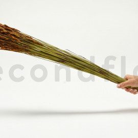 Thatch Reed séché - Bouquet 250gr - Naturel
