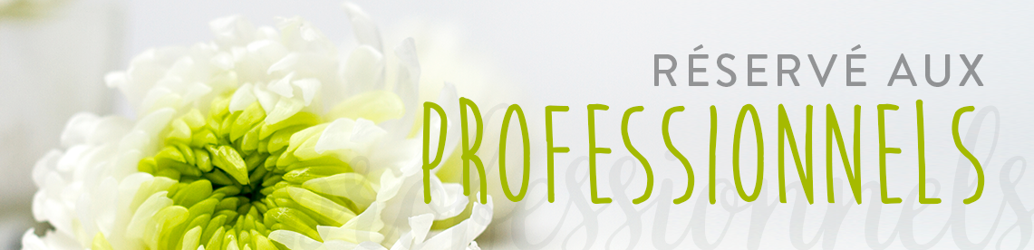 Tout savoir sur les fleurs et plantes stabilisées